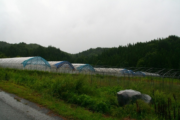 20070907t9img_0845