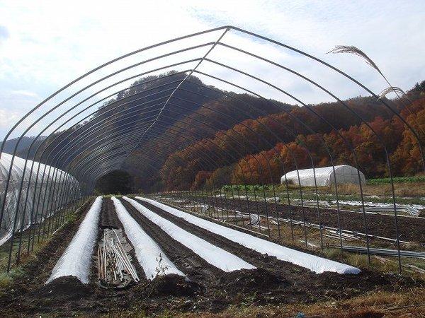 20071101dsc03752