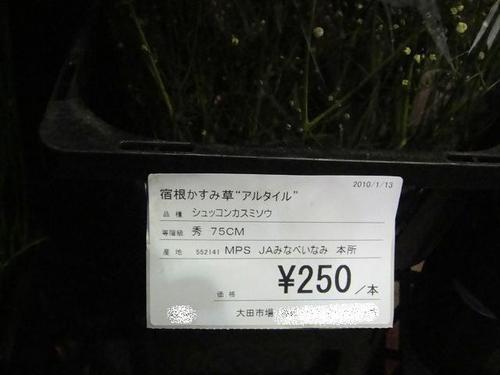 20100113dsc08046_2