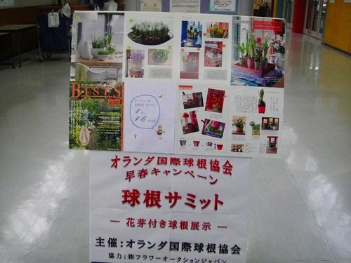 20100113dsc08084