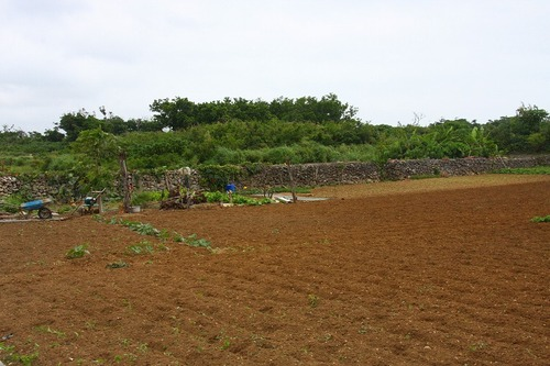 Taketomi2010img_8548
