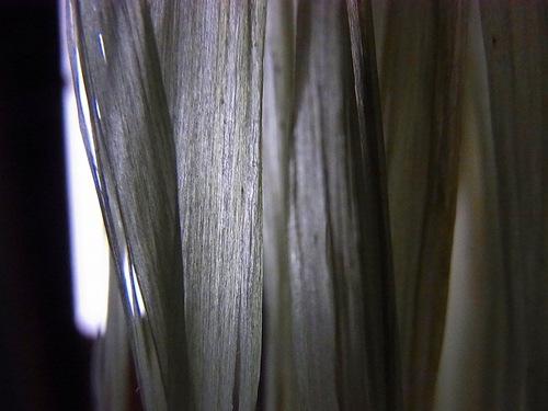 20100714cxrimg0053
