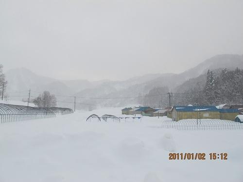 20110102img_0029