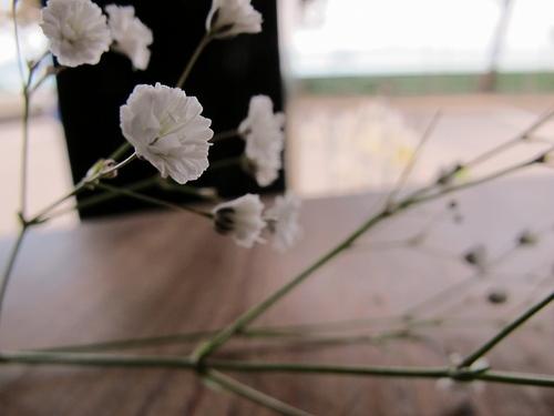 20110306gimg_3408
