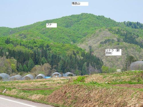 20110519barayama