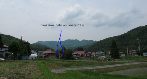 20120605sugi1